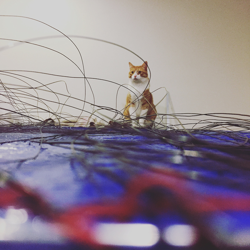 catwires.jpg