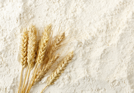 Wheat flour.   Courtesy: World-Grain.com
