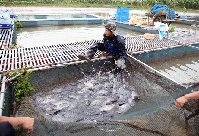 An aquaculture worker farms fish in Vietnam.   Courtesy: VietnamPlus