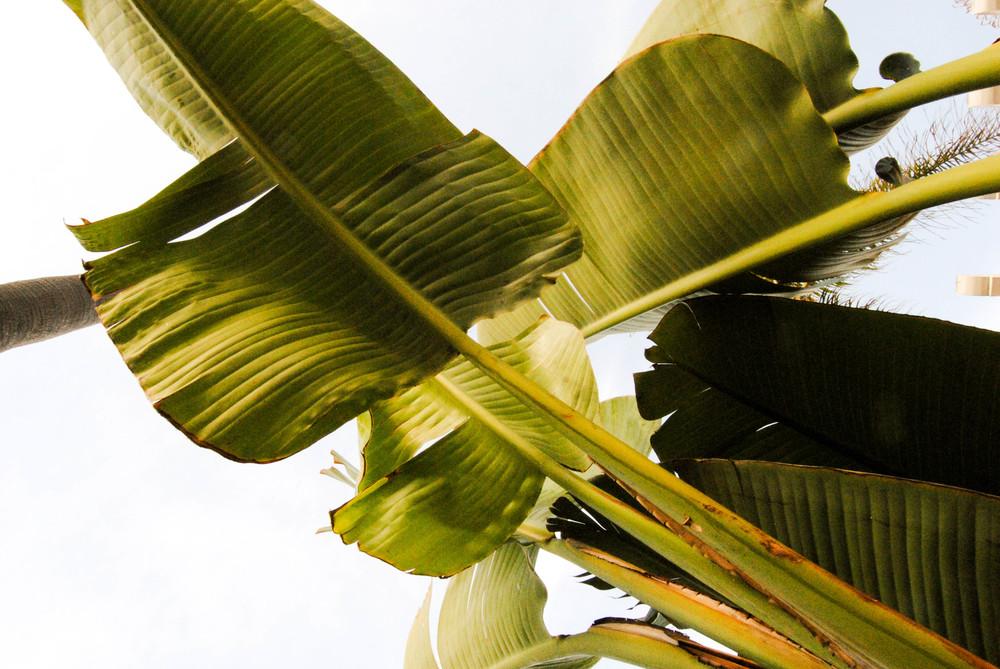 san-diego-tropical-palm-leaf