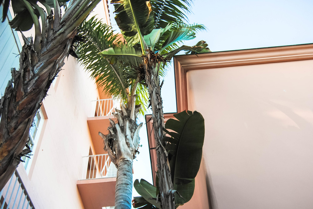 tropical-leaves-palms-pink-hotel