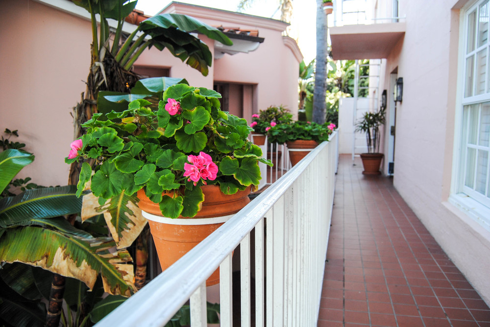 pink-flowers-at-la-valencia-hotel-san-diego