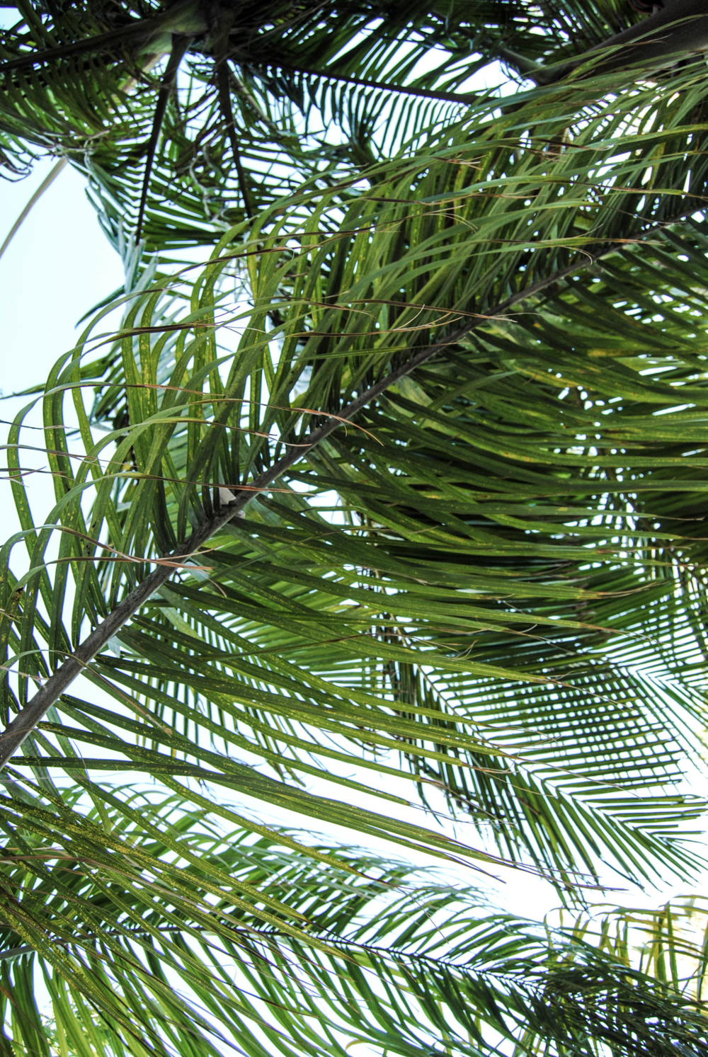 green-palm-tree-leaves