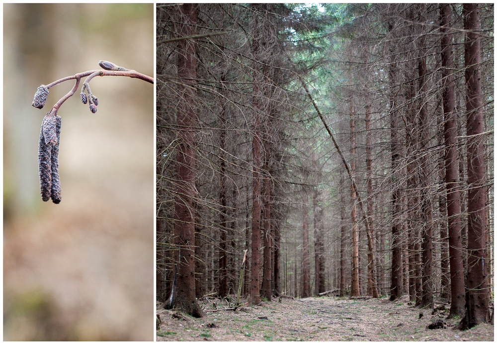 mysticforest.jpg