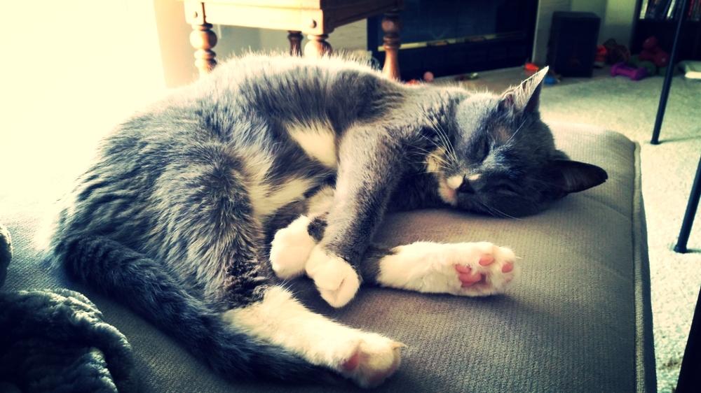 Definitely cuter while asleep.