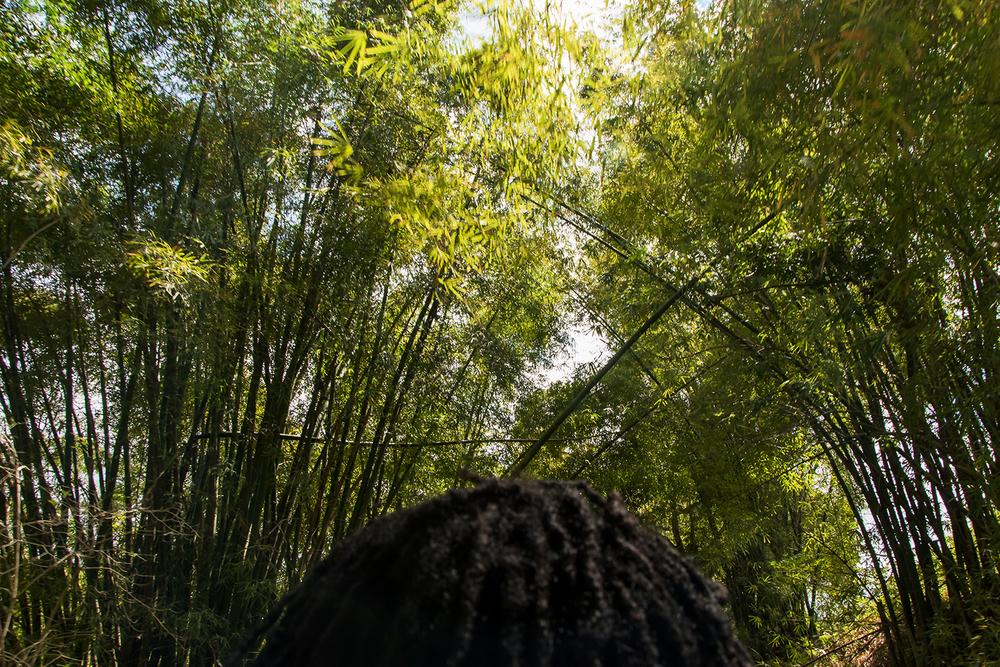 bamboodreadheadWEB.jpg