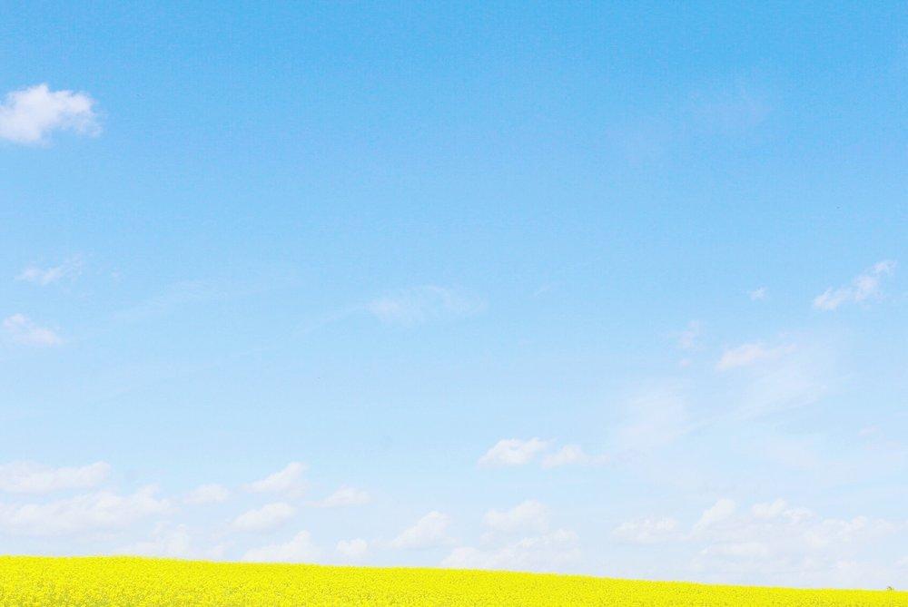 stony-point-nc-yellow-flower-field