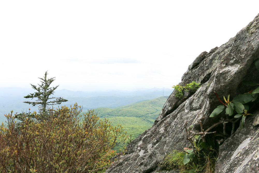 grandfather-mountain-BLM
