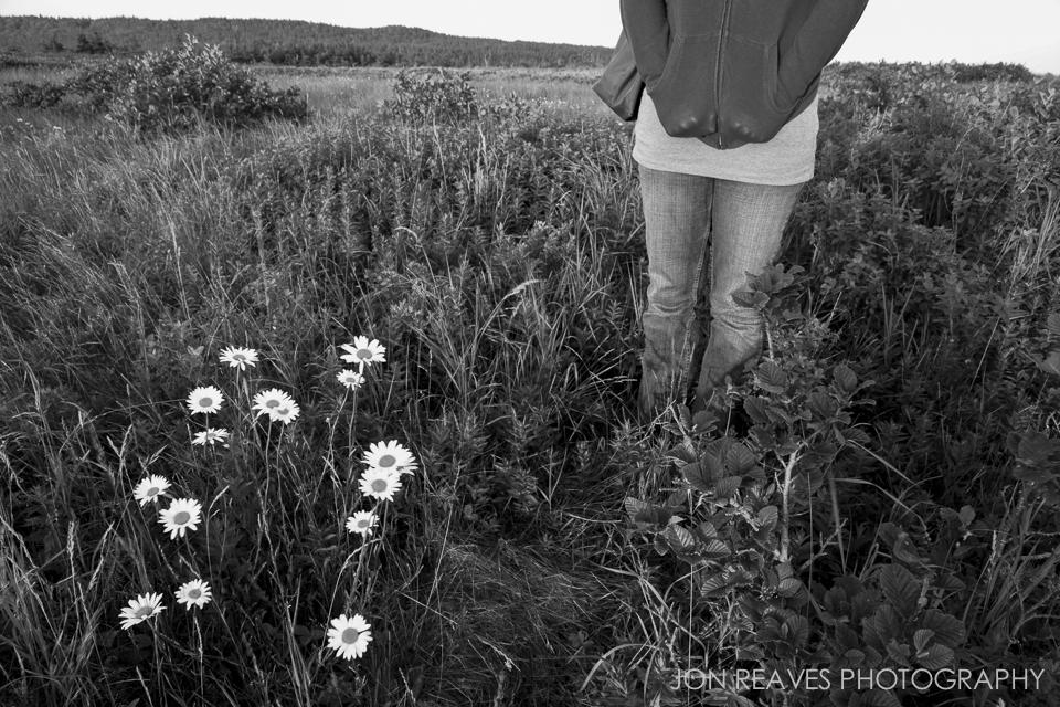 Daisies in a coastal meadow near Southwest Head, Grand Manan