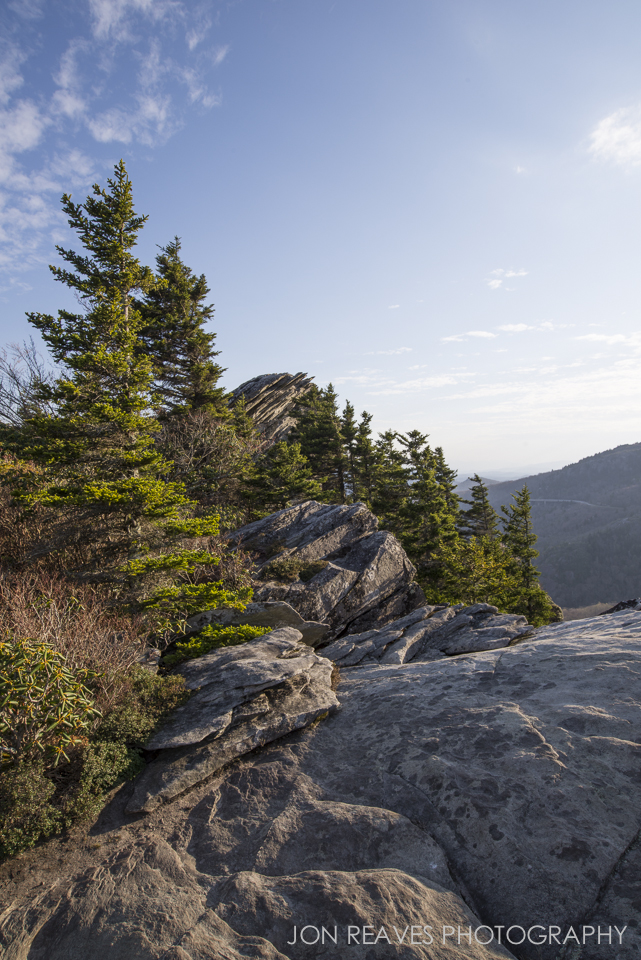 Evergreens on Rough Ridge, Blue Ridge Parkway, NC. Nikon D600, Nikkor 18-35G.