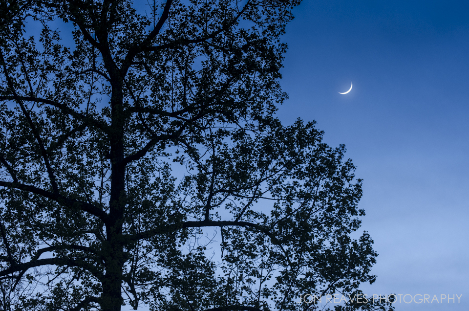Crescent Moon and Tulip Poplar, Blue Ridge Parkway, North Carolina - 92mm, f7.1, 0.6 sec, ISO 200