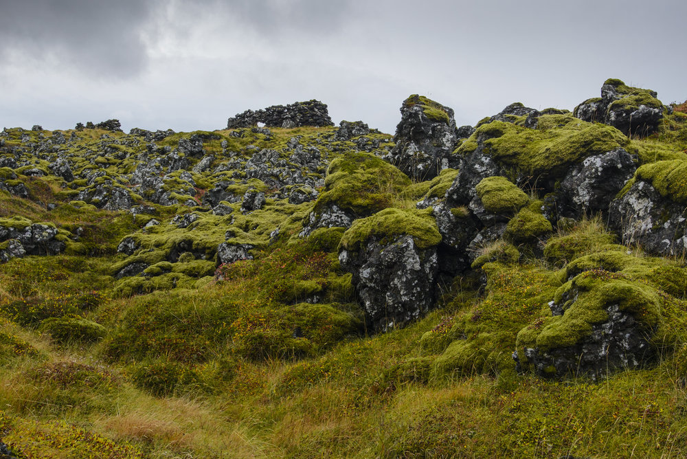 Ruins and Moss-Covered Lava Field, Snaefellsness National Park