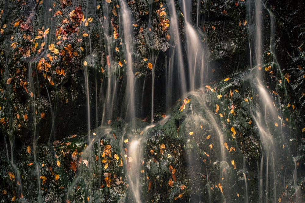 Autumn Leaves, Glen Burney Falls, North Carolina