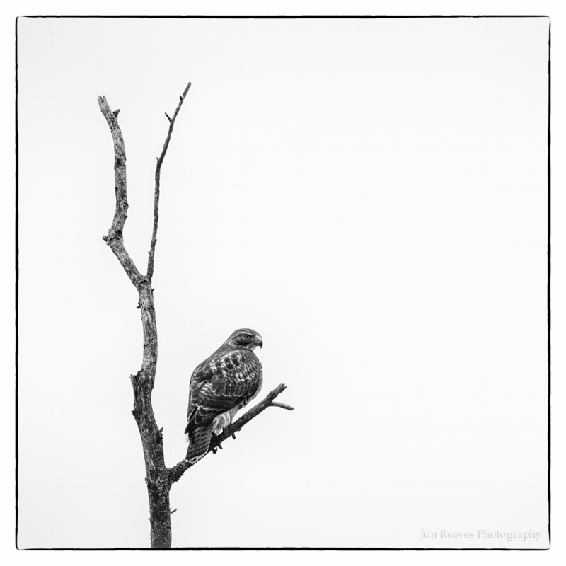 First image made with the Nikon D7100 & Nikkor 70-200mm f2.8 VR II. It was 10 degrees out, and this hawk was surveying a field for mice under a featureless, overcast sky.