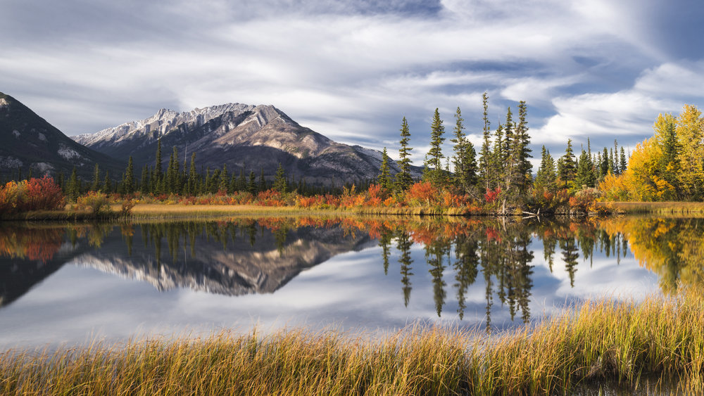 Autumn foliage and forest reflections, Jasper National Park