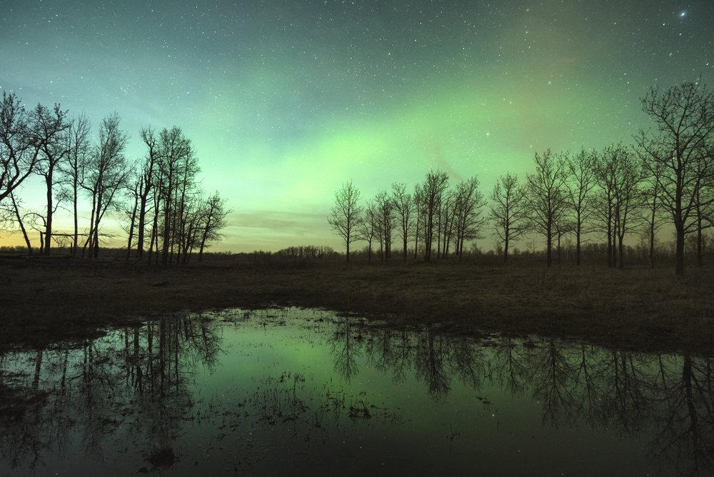 Aurora Borealis, Elk Island National Park