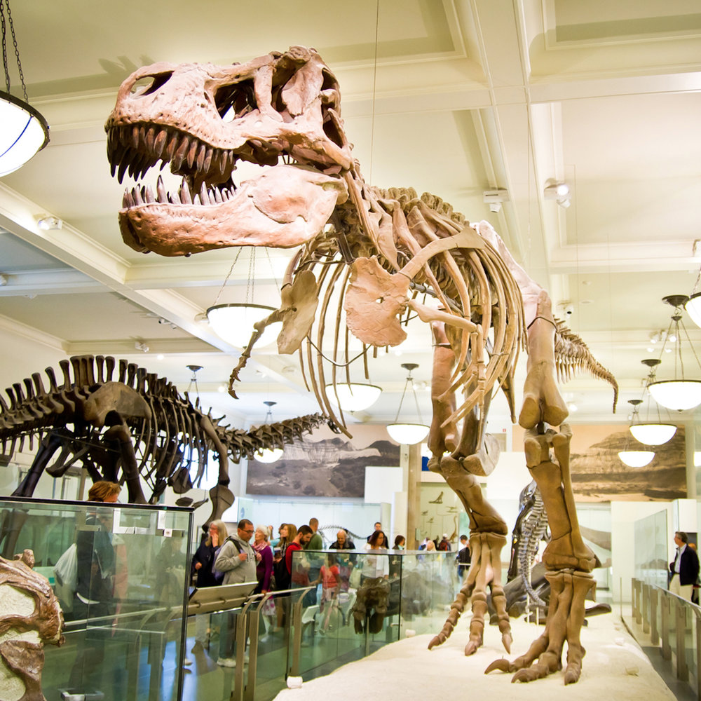 Музей Естествознания -
