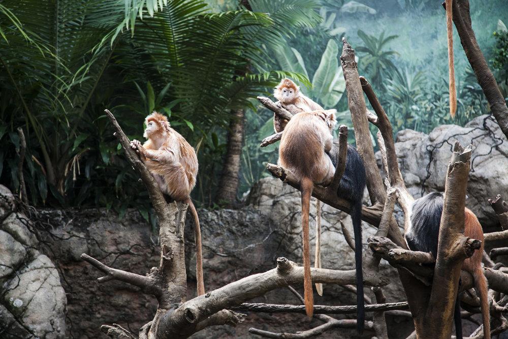 Зоопарк Бронкса.jpg