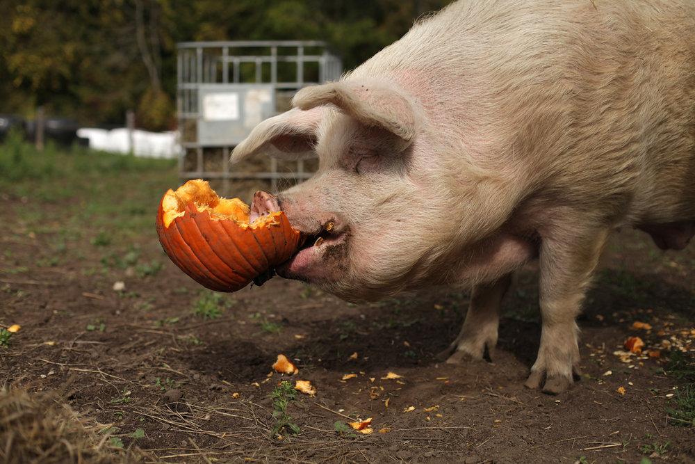 Len_pumpkin.JPG