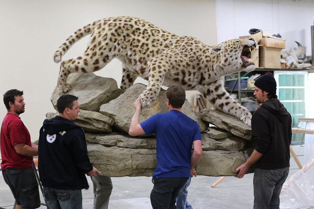 Jaguar and rock base being carried