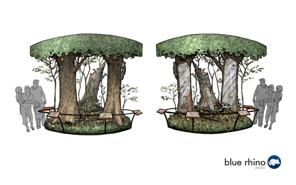 Interpretive Tree Exhibit Design