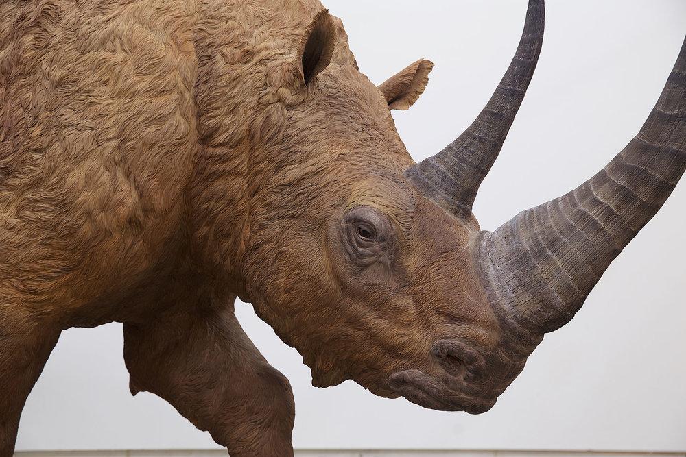 rhinoface.jpg