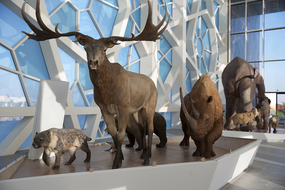 Sheikh Abdullah al Salem Cultural Centre, Kuwait City, Kuwait - Extinct animal reconstructions for Hall of Natural History in historic contemporary museum complex.