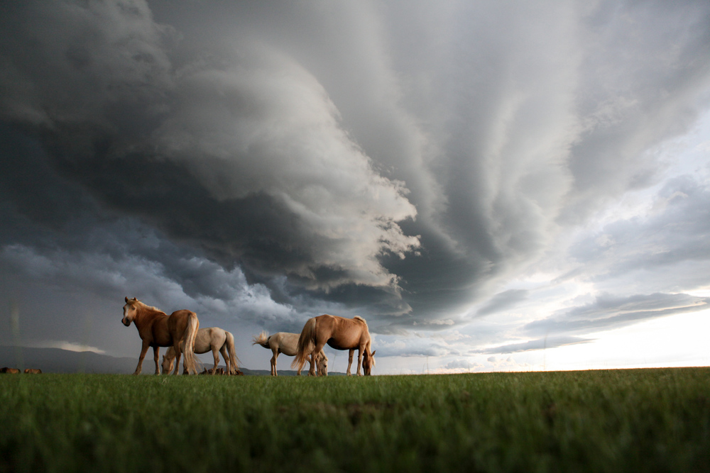 On the open steppe outside of Kharkhorin, Mongolia, a few mongol horses graze as a fierce hail storm approaches.