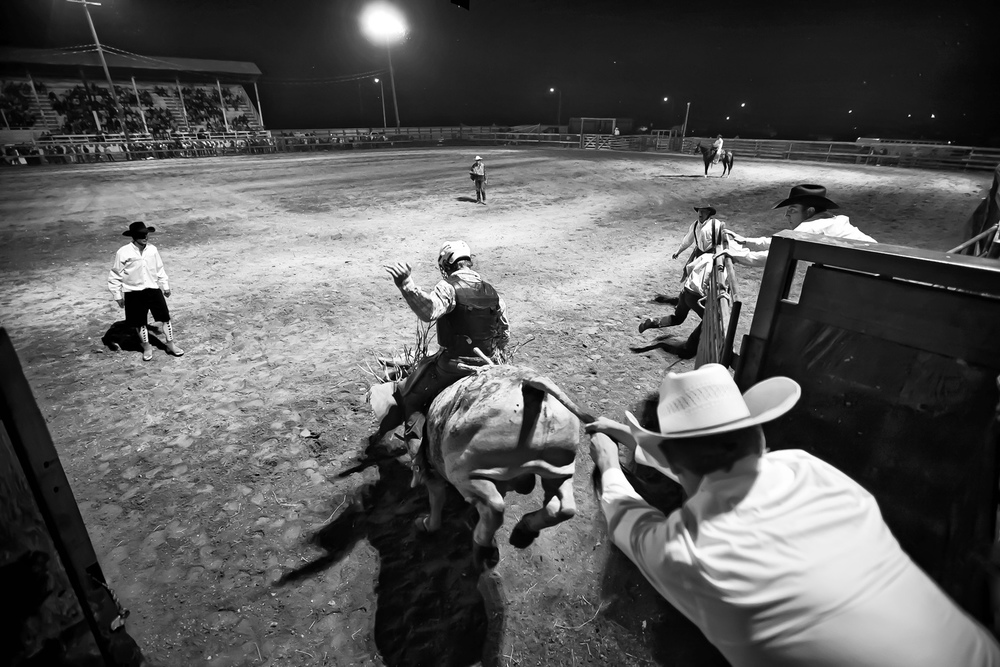 "Prized rodeo bulls are generally agile, moderately framed and weigh approximately 2,000 pounds (907 kilograms). Two cowboys embrace the popular phrase, ""hang on for dear life,"" as they attempt to handle a prized bull during the rodeo's riding competition."