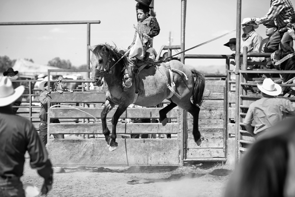 A young cowboy goes airborne during saddle bronc riding, an event whereby two judges each give one score for the cowboy (1-25) and one score for the horse (1-25). A good score is typically in the high 80s. Horses used for this event are usually geldings (castrated male horses) and are bred specifically for rodeo use.