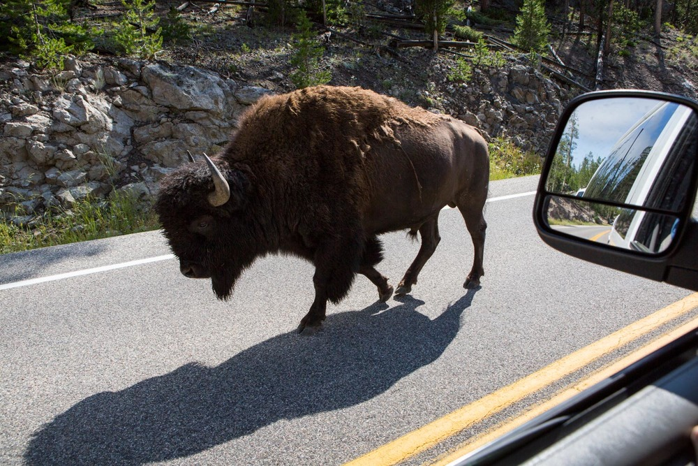 20150702_National_Geographic_Yellowstone_0576.jpg