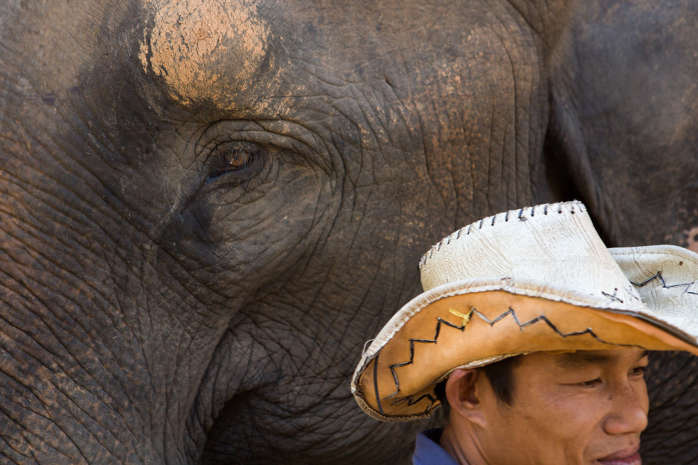 A mahout (trainer) stands near his elephant at the Elephant Conservation Center in Sayaboury, Laos.