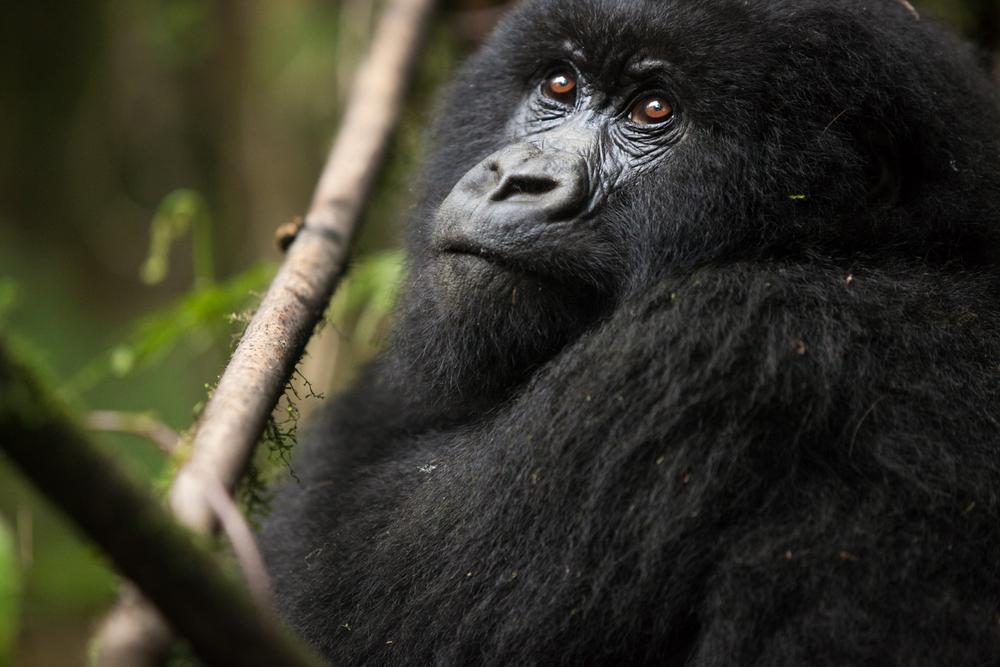 20130916_Rwanda_Uganda_Africa_1085.jpg