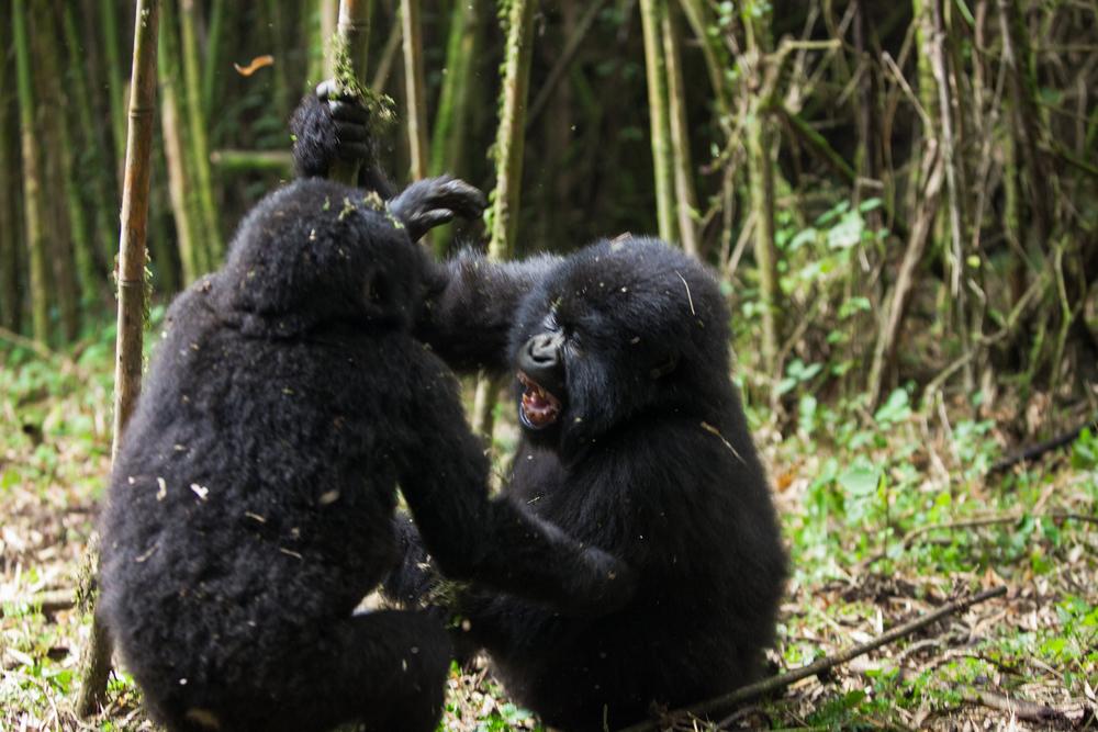 20130916_Rwanda_Uganda_Africa_1179.jpg