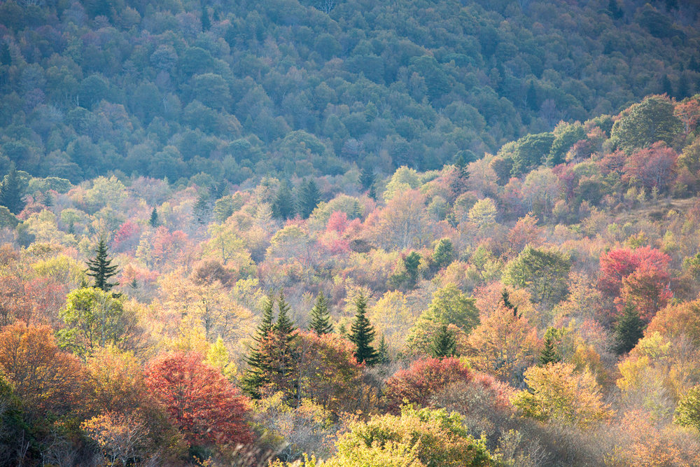 Landscape travel photography: autumn foliage color in Blue Ridge Mountains North Carolina
