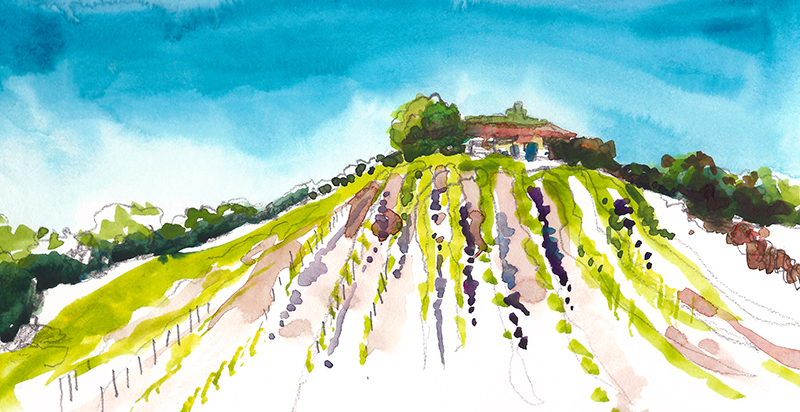 VINEYARD ,   California,  watercolor