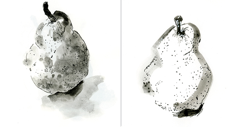 PEARS,  pen, ink, wash