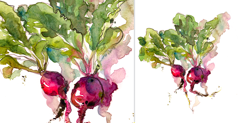 RADISH,  watercolor