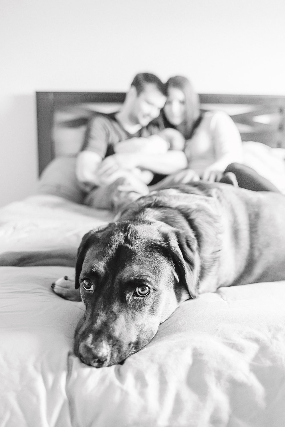Newborn Photography with Dog | In Home Session | Cassie Schott Photography
