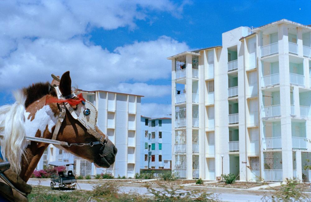Cuba portra 5 (horse and building).png