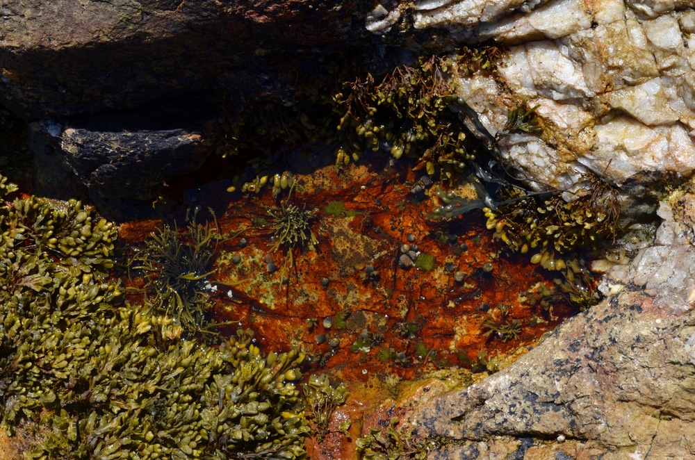 Look closely into the tide pools at Southwest Harbor to find some treasures.