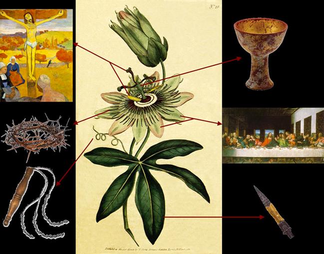 Image via Carolyn-Marie & Healing Properties of Passion Flower Power
