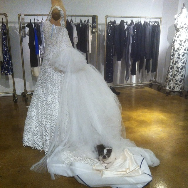 BUSTED!! sTELLA IN THE STUDIO TODAY TRYING TO FIGURE OUT HOW TO PUT ON A NEW GOWN. (At Kevin Johnn Atelier, New York)  #KevinJohnn #KJ #Princess #Stella #Avantegarde