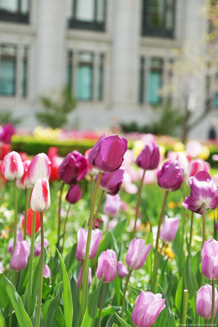 Spring_Salt_Lake_Temple_Heritage_Gardens_Wedding_Utah_Photographer_0048.jpg