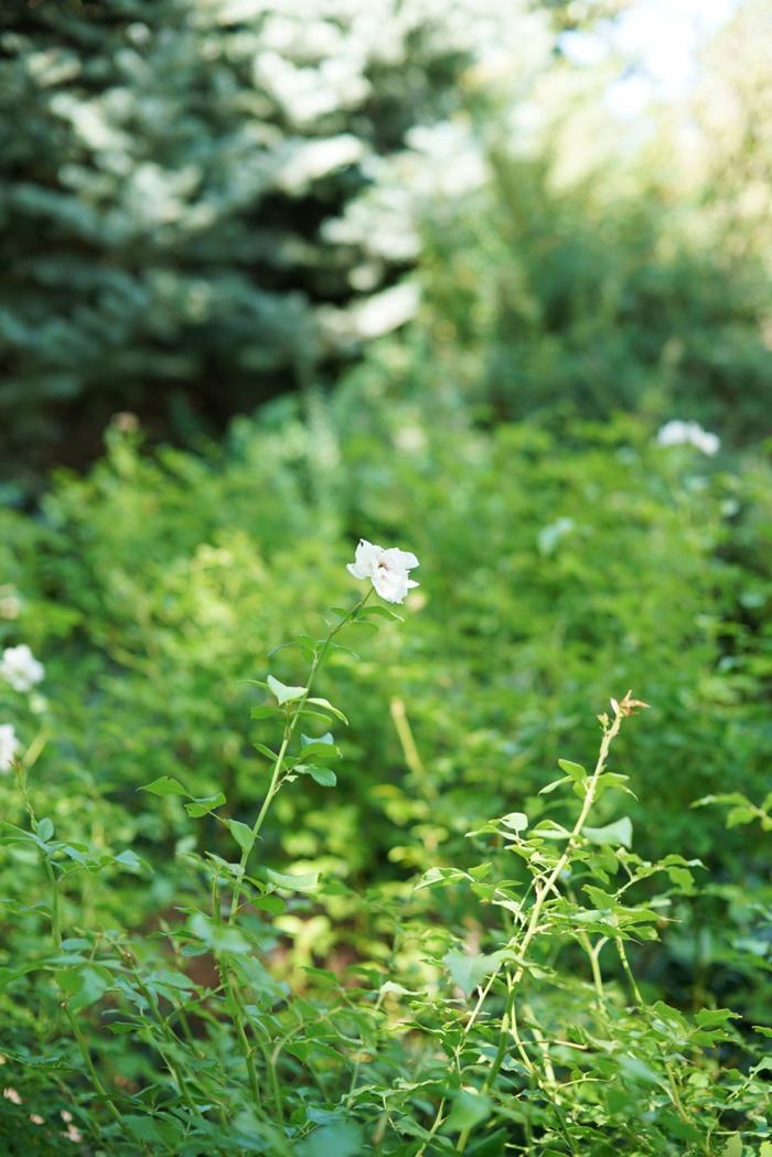 Red_Butte_Garden_Wedding_Utah_Photographer_0002.jpg