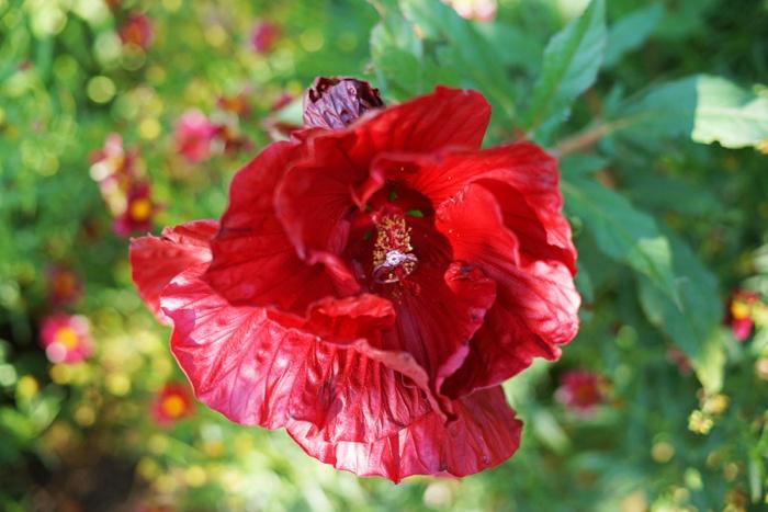 Red_Butte_Garden_Wedding_Utah_Photographer_0027.jpg