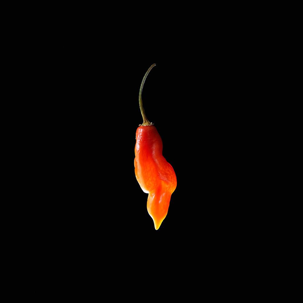 PEPPER-TRINIDAD-SCORPION-HABANERO-ORGANIC-FOOD-VEGETABLE-©-JONATHAN-R.-BECKERMAN-PHOTOGRAPHY.jpg