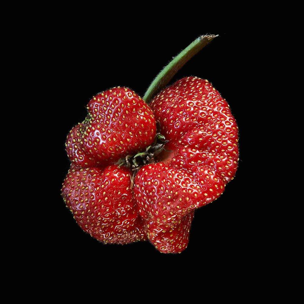 STRAWBERRY ORGANIC FOOD FRUIT © JONATHAN R. BECKERMAN PHOTOGRAPHY.jpg