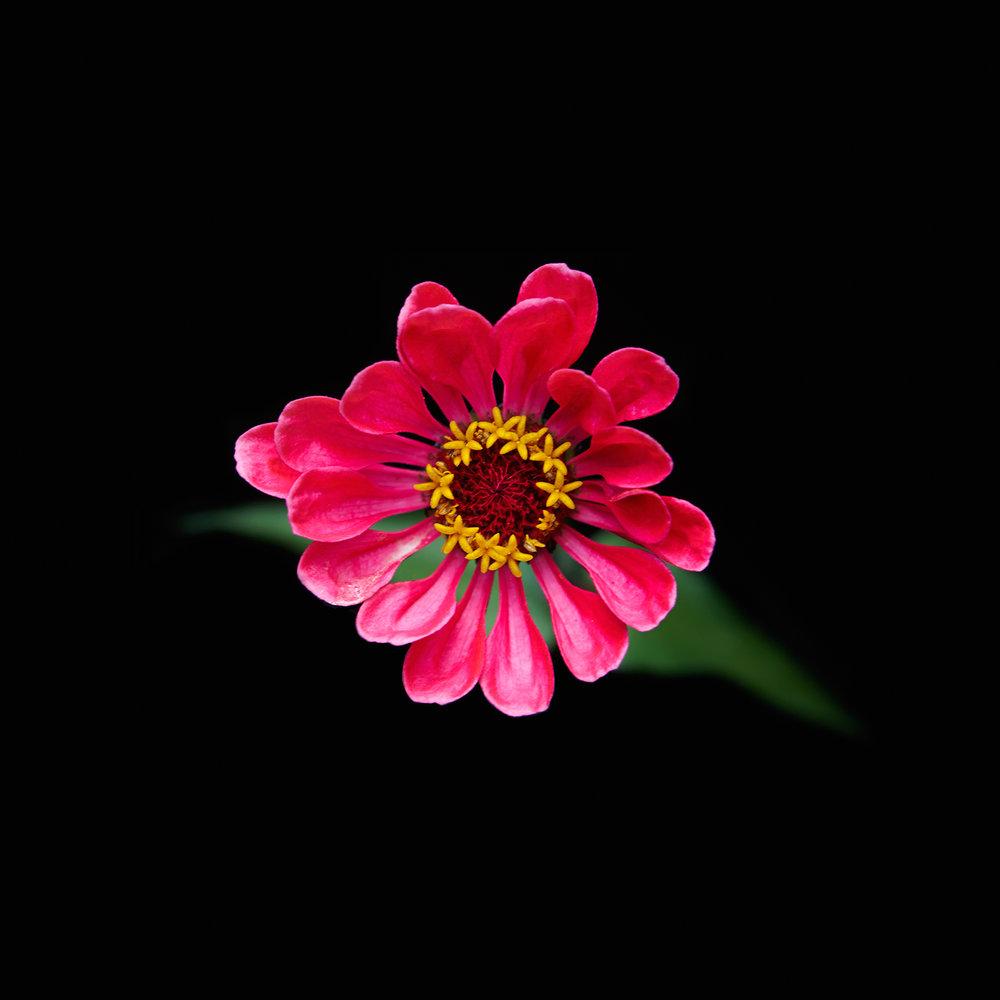 FLOWER-PINK-GREEN-ORGANIC-©-JONATHAN-R.-BECKERMAN-PHOTOGRAPHY.jpg