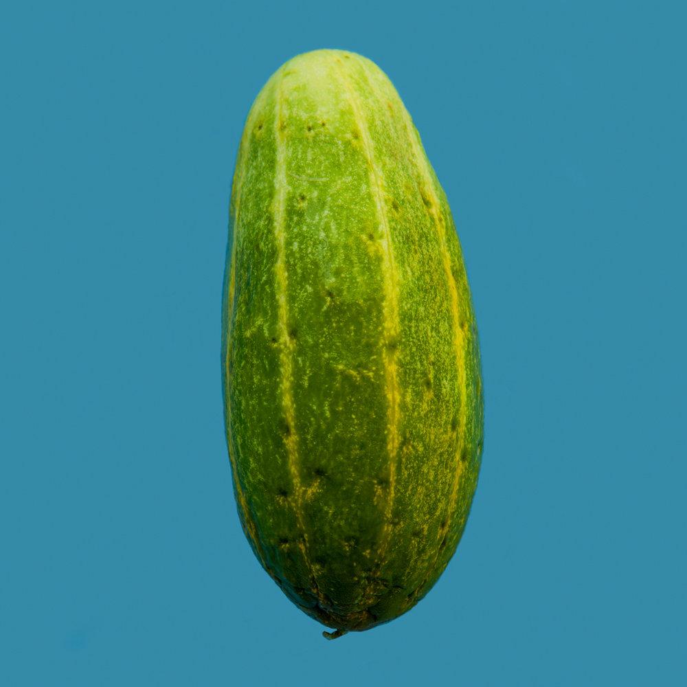 CUCUMBER-HICKORIES-FARM-ORGANIC-VEGETABLE-©-JONATHAN-R.-BECKERMAN-PHOTOGRAPHY-083016_COLOR.jpg